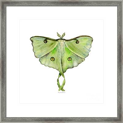 100 Luna Moth Framed Print by Amy Kirkpatrick