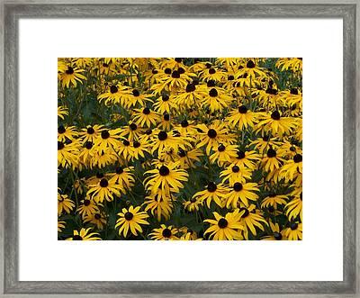 100 Susans Framed Print