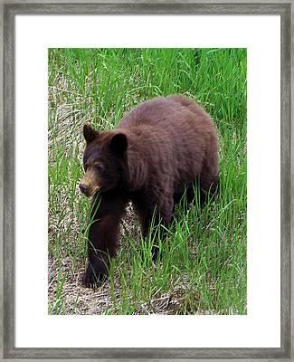 100414 Black Bear Framed Print
