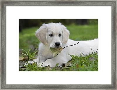 101130p064 Framed Print by Arterra Picture Library