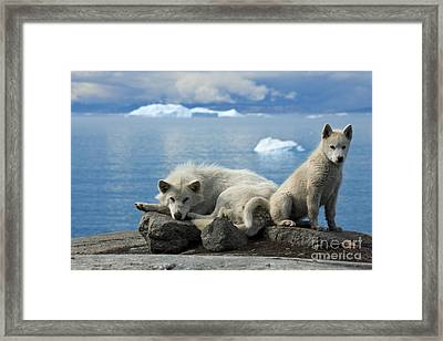 101130p240 Framed Print by Arterra Picture Library