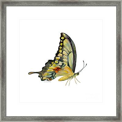 104 Perched Swallowtail Butterfly Framed Print by Amy Kirkpatrick