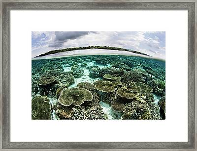 A Shallow Coral Reef Thrives Framed Print by Ethan Daniels