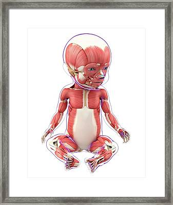 Baby's Muscular System Framed Print by Pixologicstudio