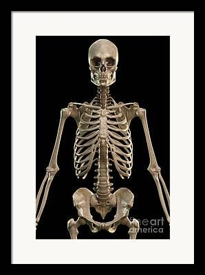 Axial Skeleton Framed Prints