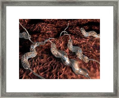 Campylobacter Jejuni Bacteria Framed Print by Hipersynteza