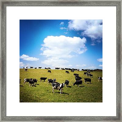 Cows Framed Print by Les Cunliffe