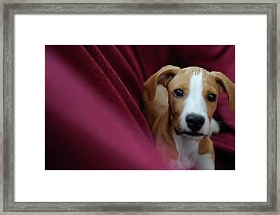 Cute Puppy Portraits Framed Print