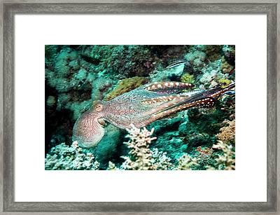 Day Octopus Framed Print