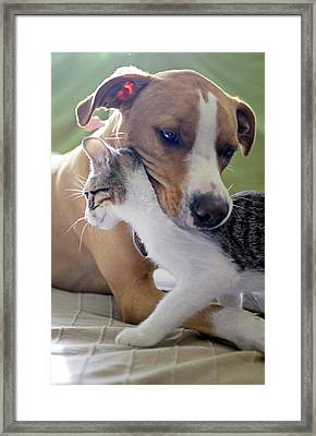 Dog And Kitten Framed Print