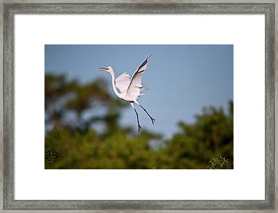 Florida, Venice, Audubon Sanctuary Framed Print by Bernard Friel