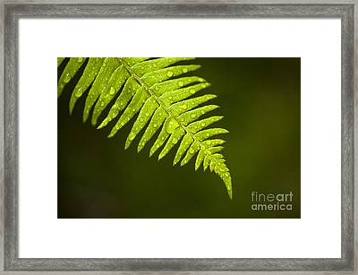 Forest Setting With Close-ups Of Ferns Framed Print by Jim Corwin