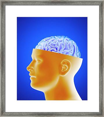 Human Brain Framed Print by Alfred Pasieka/science Photo Library