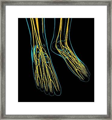Human Foot Nervous System Framed Print by Pixologicstudio/science Photo Library
