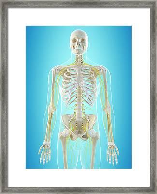 Human Nervous System Framed Print by Sciepro