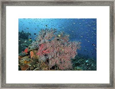 Indonesia, Papua, Raja Ampat Framed Print