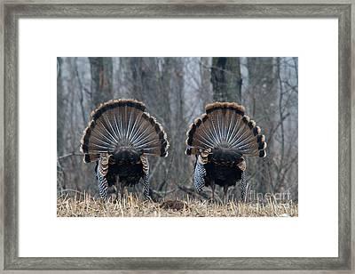 Jake Eastern Wild Turkeys Framed Print by Linda Freshwaters Arndt