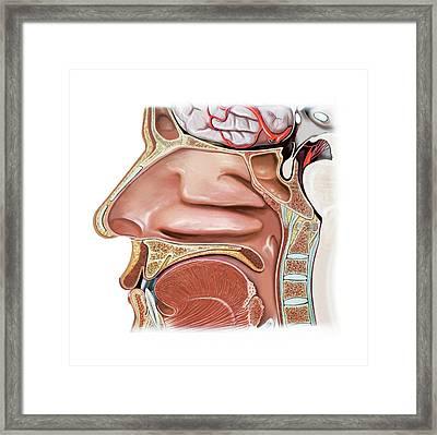 Nasal Cavity Framed Print