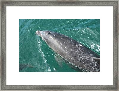 New Zealand, South Island Framed Print