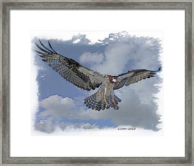 Osprey Flight Framed Print by Larry Linton