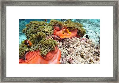 Photograph Framed Print by Roberto Galli della Loggia