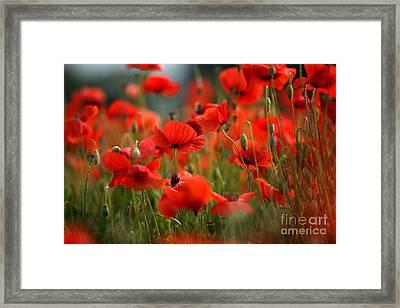 Poppy Dream Framed Print by Nailia Schwarz