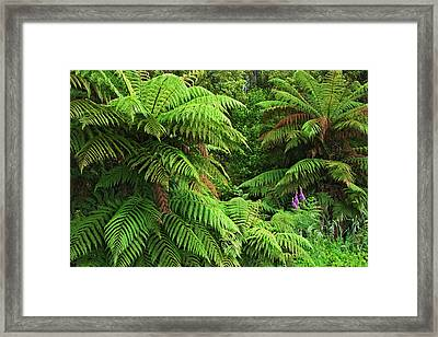South Pacific, New Zealand, South Island Framed Print by Jaynes Gallery