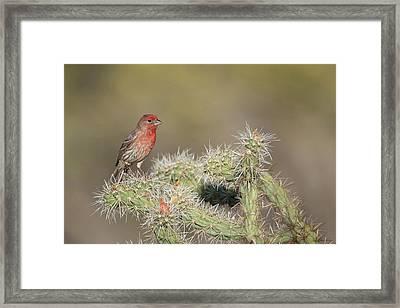 Usa, Arizona, Buckeye Framed Print by Jaynes Gallery