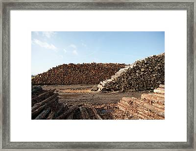 Wood Chip Fuel Production Framed Print by Lewis Houghton/science Photo Library