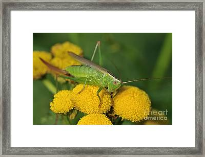 110221p244 Framed Print by Arterra Picture Library
