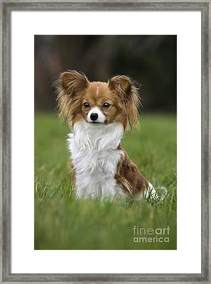 110506p146 Framed Print by Arterra Picture Library