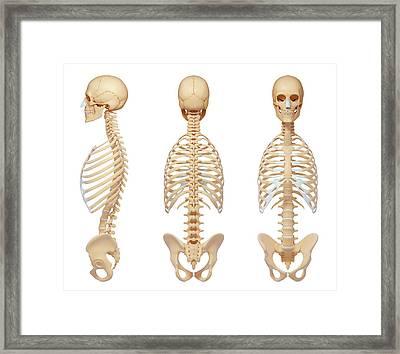 Human Skeletal System Framed Print by Pixologicstudio