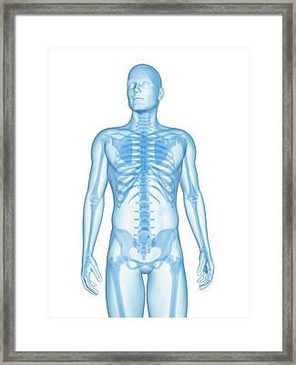 Human Skeletal System Framed Print by Sebastian Kaulitzki