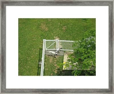 Busch Gardens - 12121 Framed Print