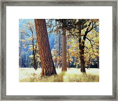 California, Sierra Nevada Mountains Framed Print by Christopher Talbot Frank