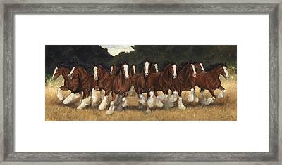 12 Clydesdales Running Framed Print by Don  Langeneckert