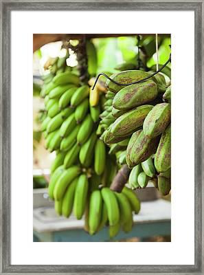 Cuba, Pinar Del Rio Province, Vinales Framed Print
