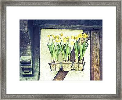 Daffodils Framed Print by Tom Gowanlock