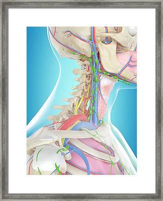 Human Anatomy Framed Print by Sciepro