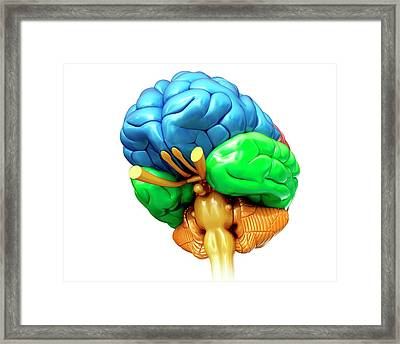 Human Brain Regions Framed Print by Pixologicstudio/science Photo Library
