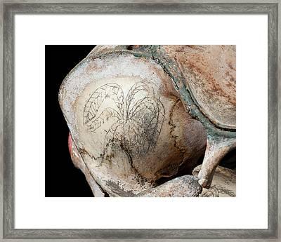 Ink Scrimshaw On Dolphin Skull Framed Print