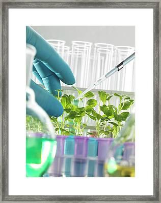Plant Biotechnology Framed Print by Tek Image