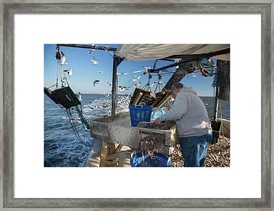 Shrimp Fishing Framed Print by Jim West