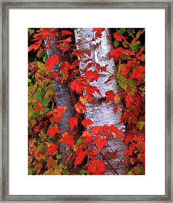 Usa, New Hampshire, White Mountains Framed Print by Jaynes Gallery