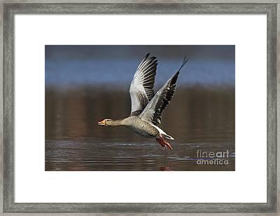 120223p134 Framed Print
