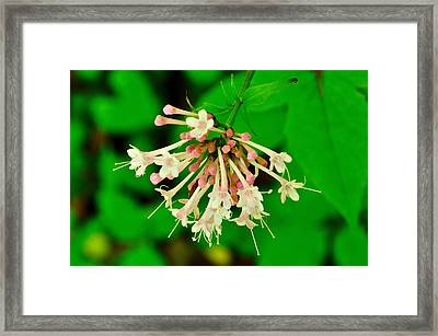 120427_101 Framed Print