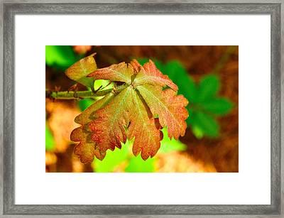 120427_111 Framed Print
