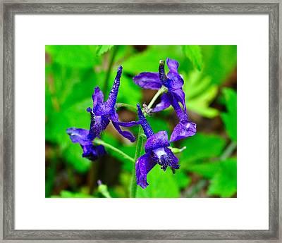 120427_148 Framed Print