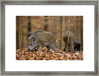 121213p274 Framed Print by Arterra Picture Library