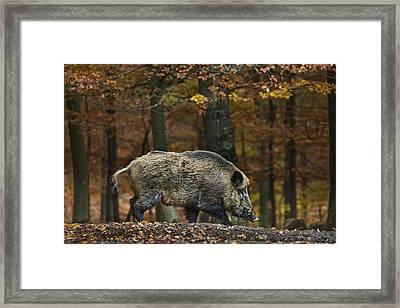 121213p284 Framed Print